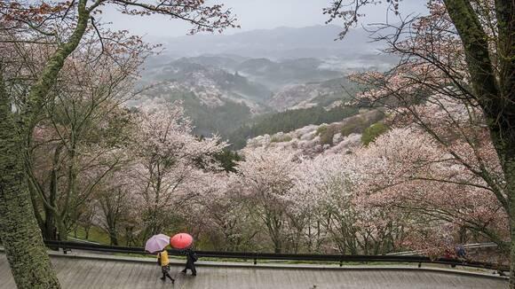奈良の文化祭カレンダー【2017】大学・短学の学園祭日程まとめ