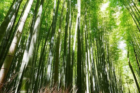 京都の文化祭カレンダー【2017】大学・短学の学園祭日程まとめ